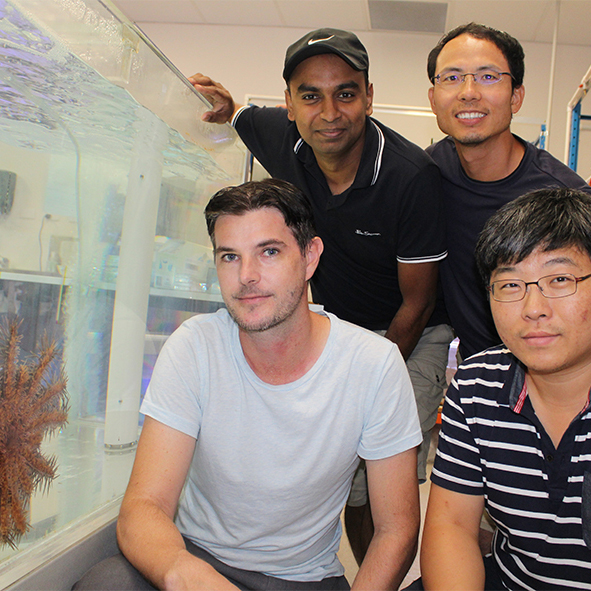 USC Associate Professor Scott Cummins (nearest to starfish) with fellow researchers (clockwise from back left) Dr Utpal Bose, Dr Min Zhao and Dr Tianfang Wang.