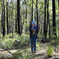 Honours student shines light on forest marsupial