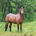 Bird bacteria linked to horse and human health