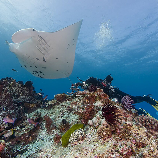 Dr Kathy Townsend researching manta ray populations at Lady Elliot Island.
